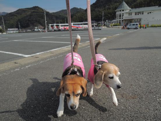 130315-15cookychara walk on kawadu01