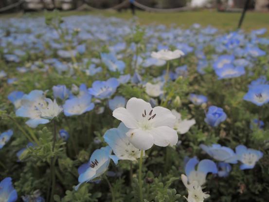 130406-30flower N03