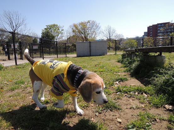 130413-06cooky walk on dog run02
