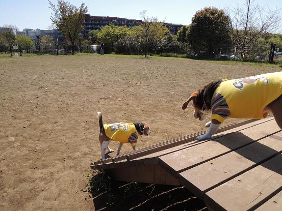 130413-07cookycxhara in dog run