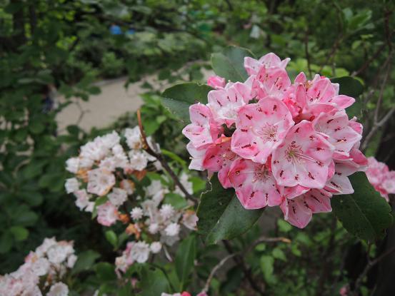 130525-04N flower01