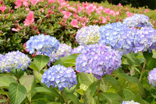 130525-06ND flower02
