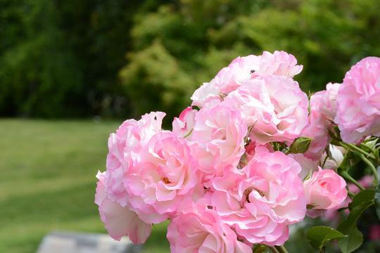 130525-09ND flower04