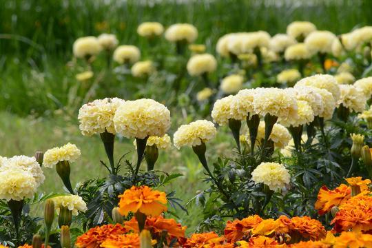 130525-13ND flower05