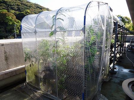 在りし日の温室