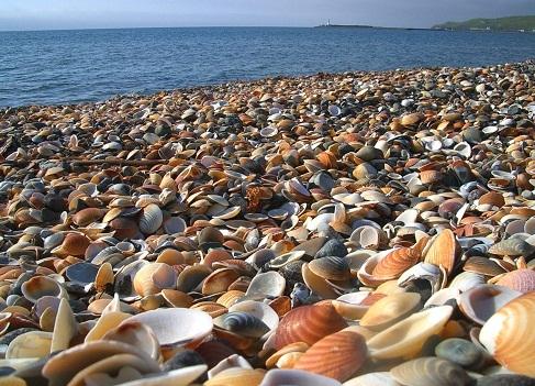 120117貝殻浜