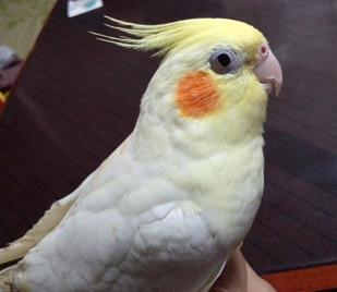 20120423桜2