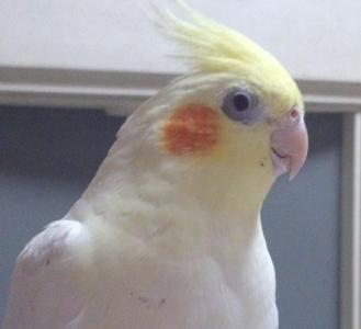 20120426桜