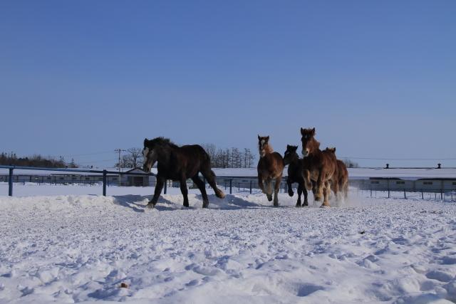 095若い馬