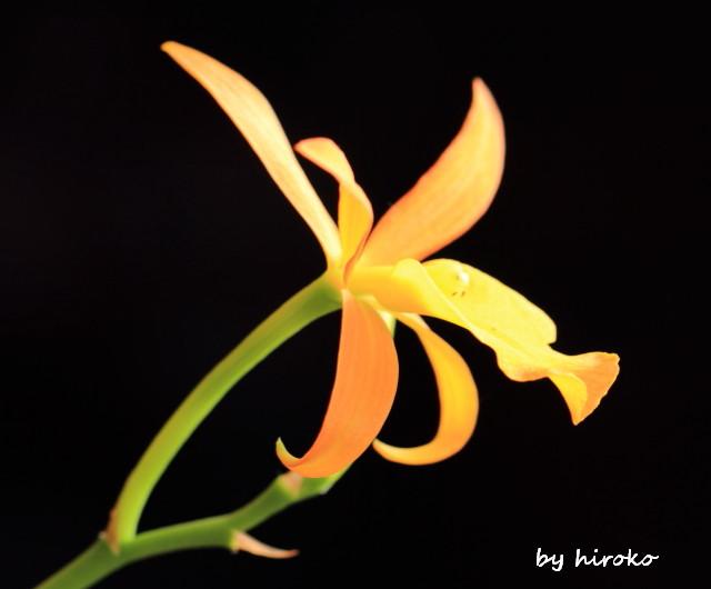 026オレンジのラン