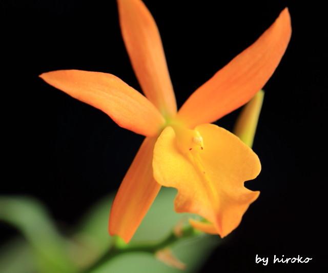 028オレンジのラン
