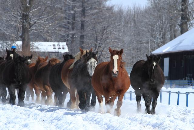 167妊娠馬