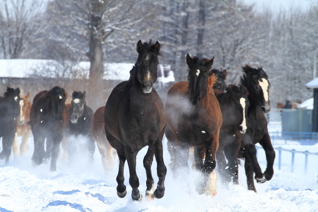 250はしゃぐ馬たち