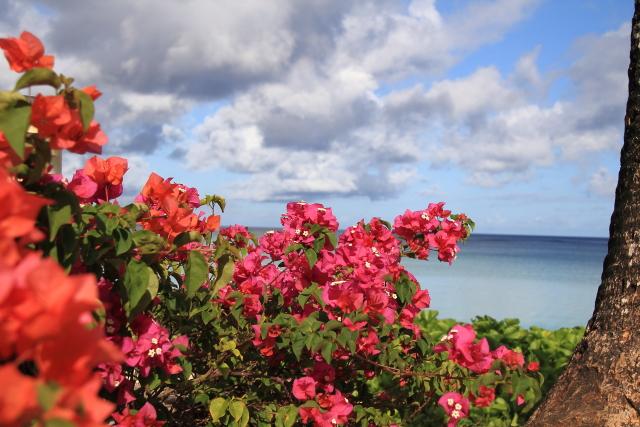 056.鮮やかに咲くブーゲンビリアと海JPG