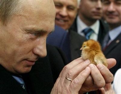 プーチンひよこ