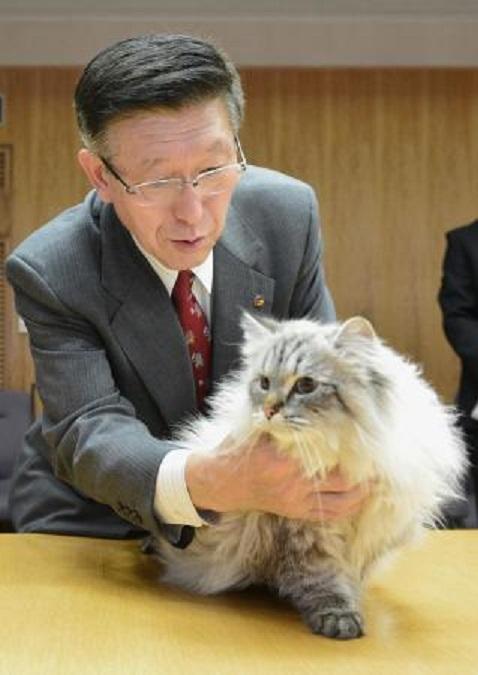 シベリア猫