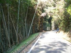 清水山竹林