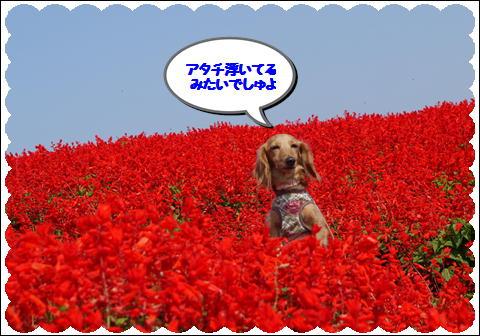 花さじき201110④