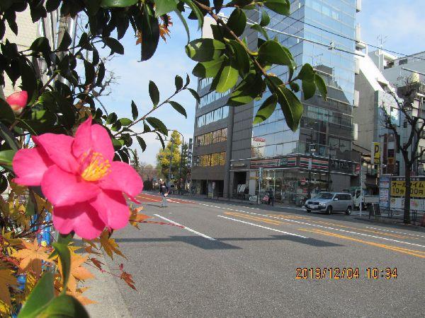 1204shinobazu01.jpg