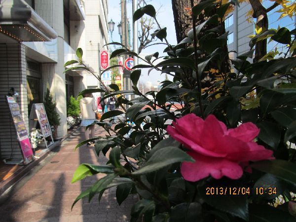 1204shinobazu02.jpg