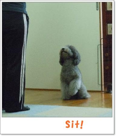 sit-1.jpg