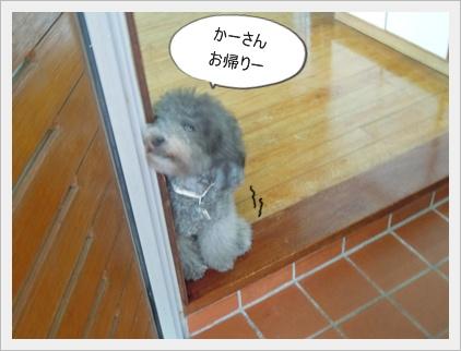 wasawasa.jpg
