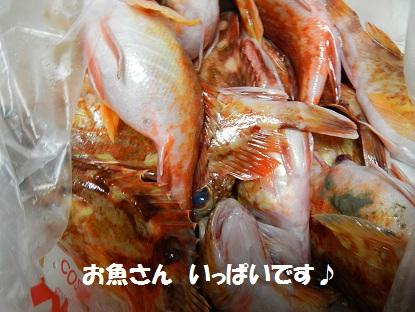 2012430sakana.jpg