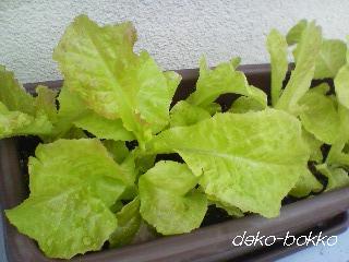 再生野菜-8.23