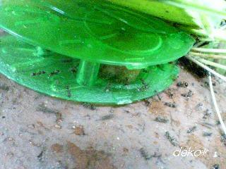 巣のアリを置いてみる