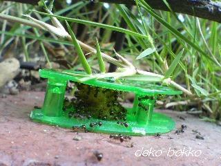 ウルトラ 巣のアリ。。。ちがうアリ?