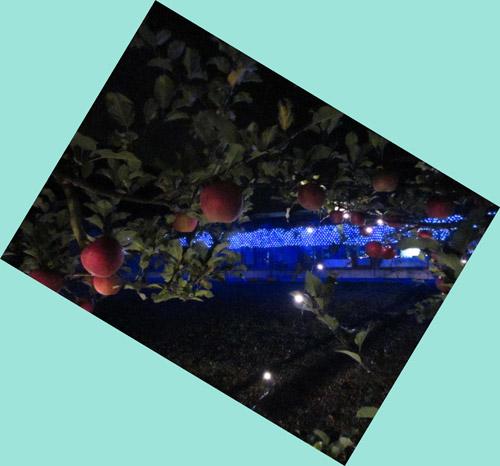 リンゴ畑のイルミネーション