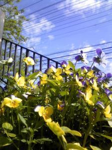 flower_convert.jpg