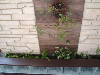 green1026_2011_11.jpg