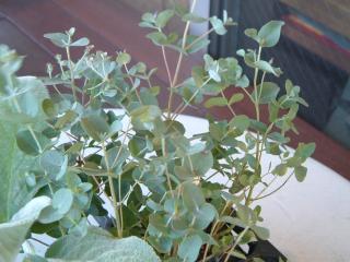 green12_0923_2011.jpg