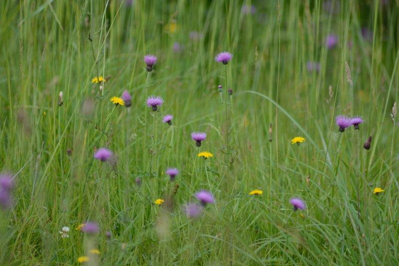 初夏の草原