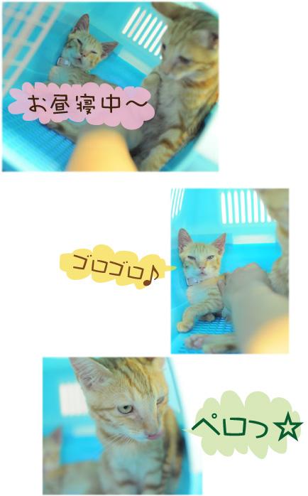 猫 トラ ウメ