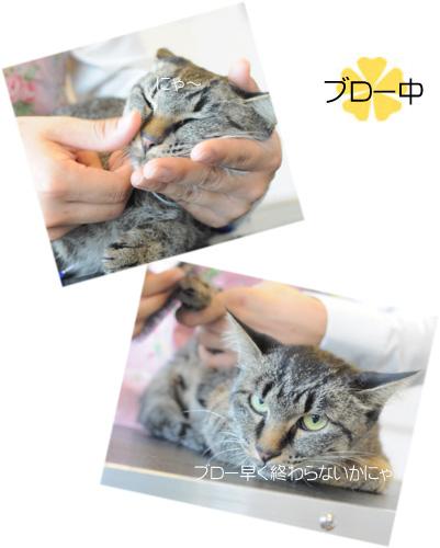 猫 クロミちゃん3