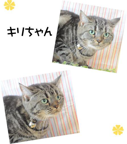 猫 キリちゃん2