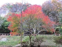虹のような紅葉