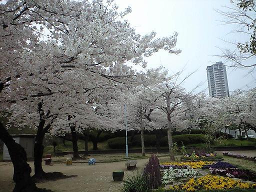 12.04桜CA391803