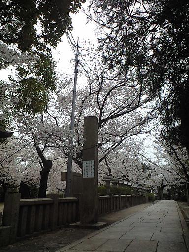 12.04桜CA391805