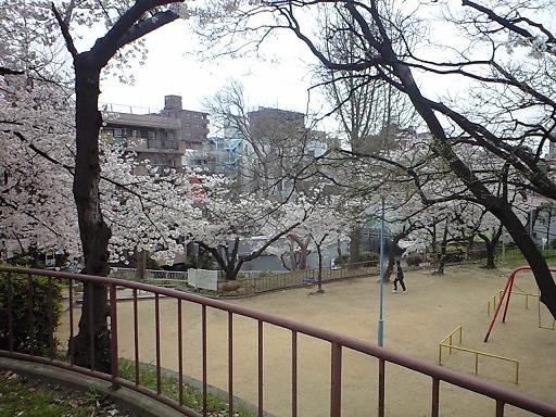 12.04桜CA391806