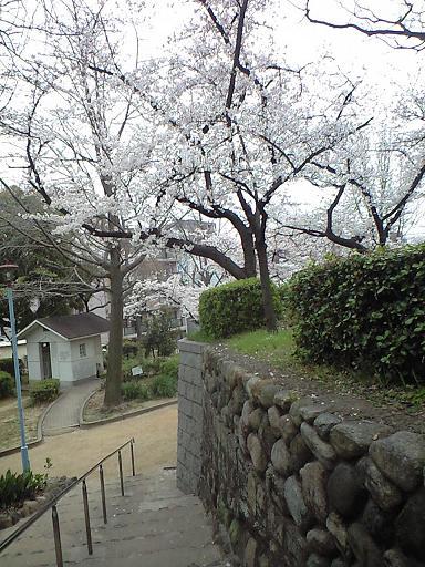 12.04桜CA391807