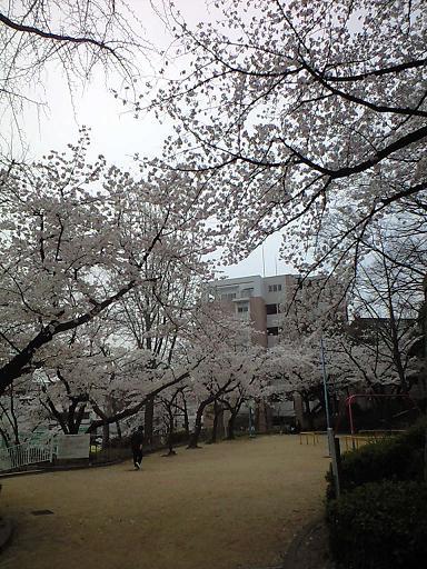 12.04桜CA391808