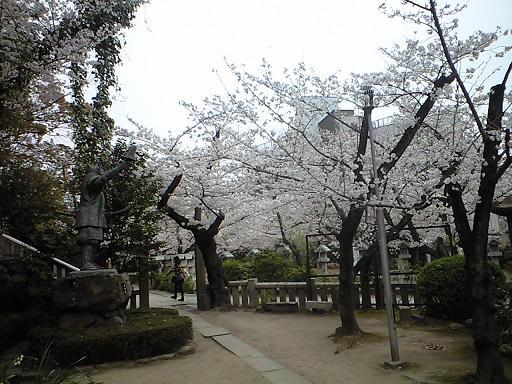 12.04桜CA391809