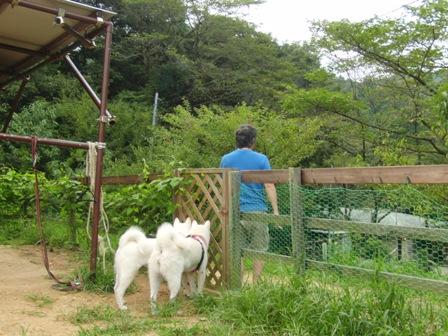 8.31犬山キャンプ場1