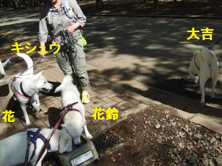 9.28a代々木公園・ペット用水飲み場