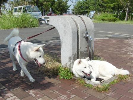 10.4城南島海浜公園3