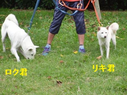 10.13リキ君(右)&ロク君