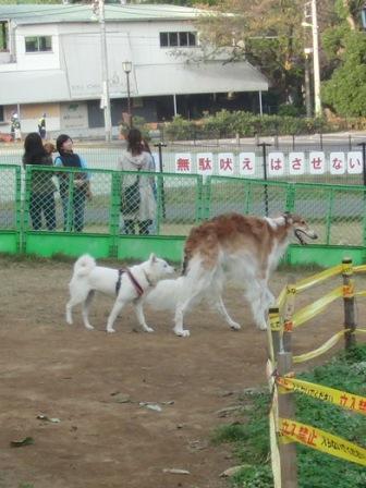 11.4芦花公園ドッグラン